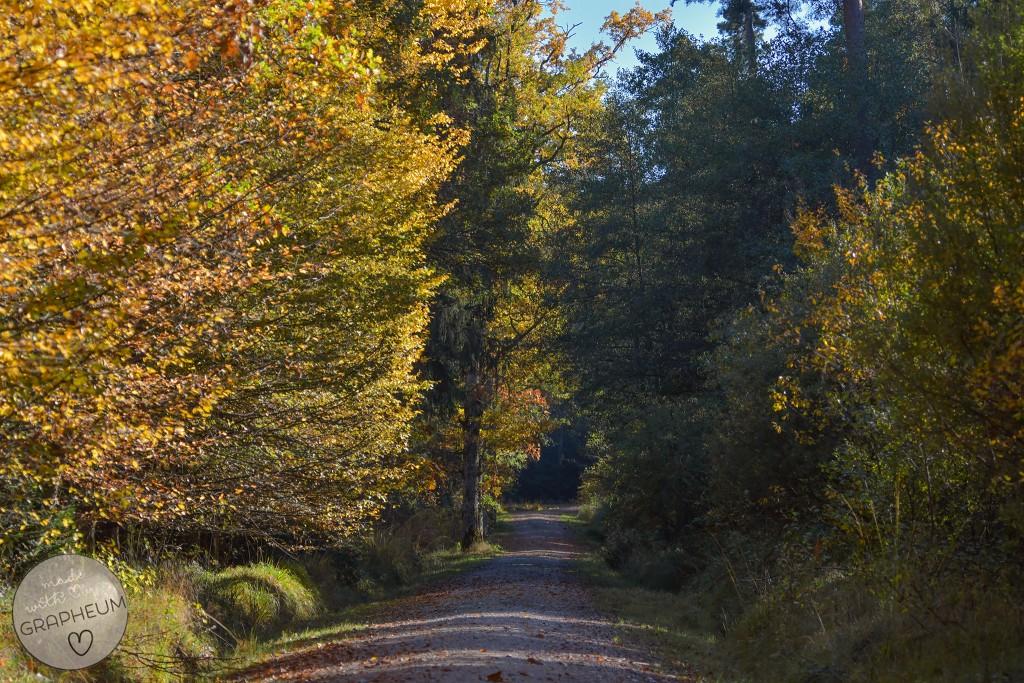 Wald_