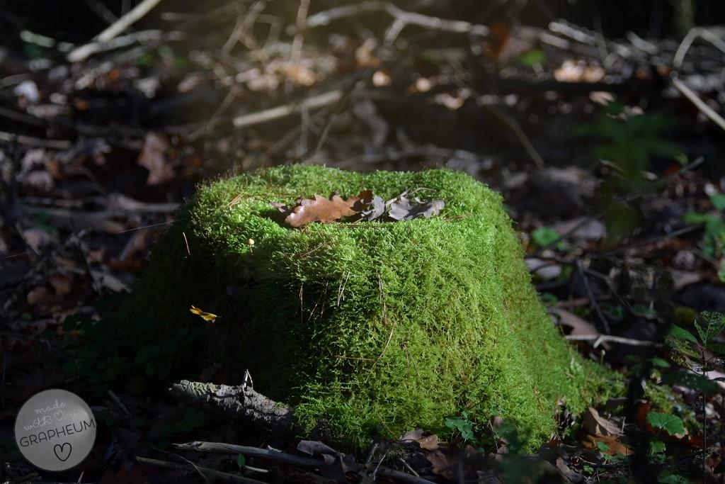 Wald_Stumpf